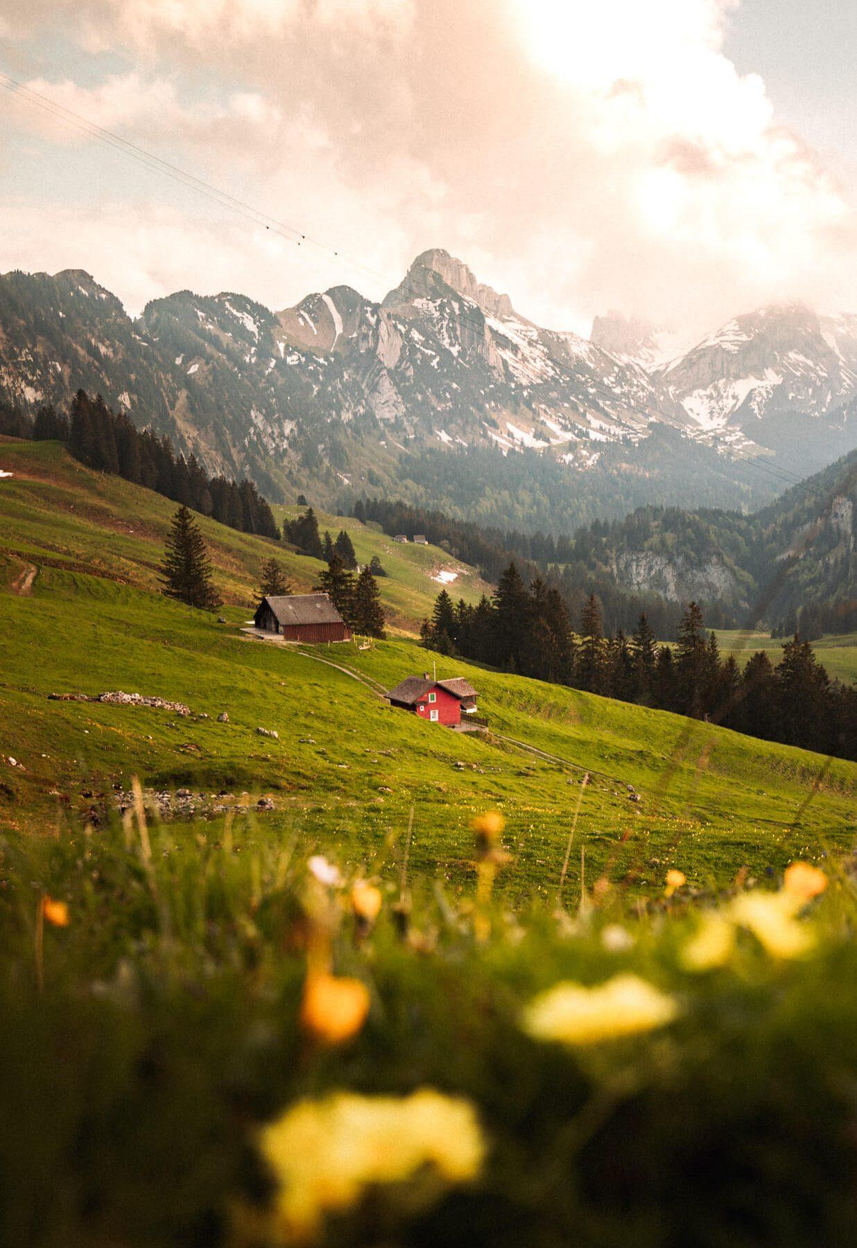 Website_Blog_Alps342A5641_0016